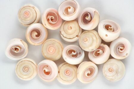 A pile of natural spiral sea shell beads
