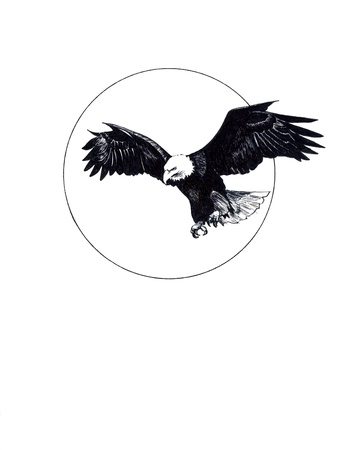 eagle wing: Ink drawing of an eagle