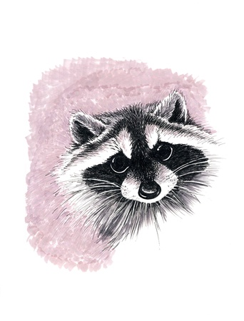 Pen drawing of a raccoon Stock Photo - 9680431