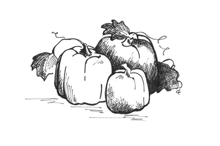 Ink drawing of three pumpkins