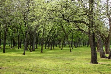 Forest park with cedar elm trees