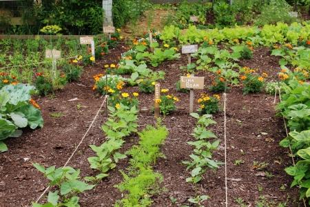 야채 정원