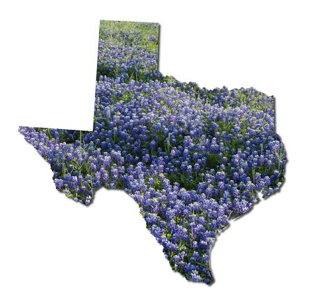 Texas and bluebonnets photo