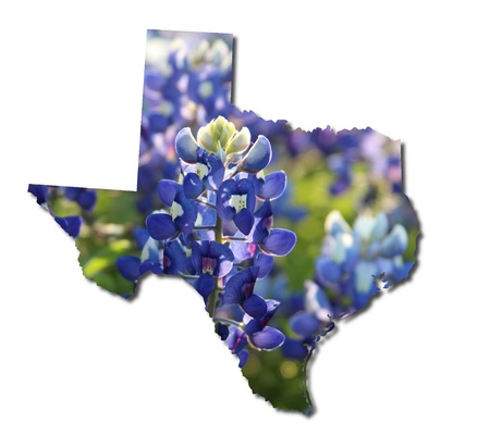 bluebonnet: Texas and bluebonnets