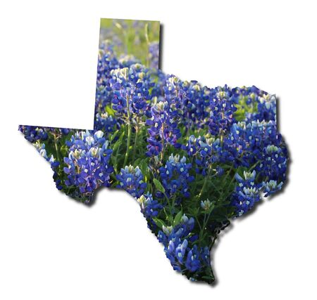 Texas state shape with bluebonnets Stock Photo