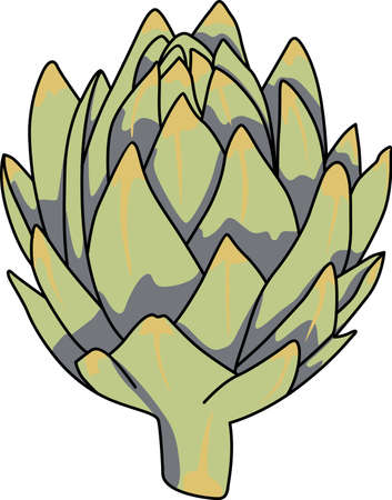 tuber: This artichoke is perfect to add for a gift to a gardener.  They will love it. Illustration