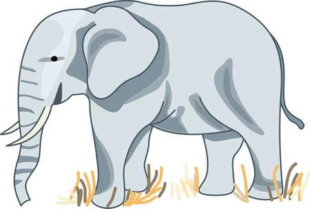 Ontdek India met deze leuke olifant. Perfect voor je klas!