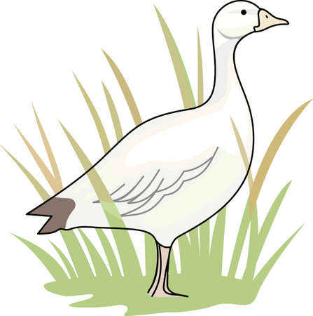 gosling: Birds are fascinating animals.  This is a perfect gift for a favorite birder you know.  They will love it!