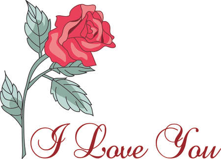 tea rose: Im so glad I picked you.  A beautiful rose to give to a loved one.  A perfect gift for Valentines Day.
