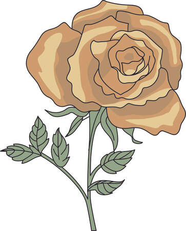 dozen: Im so glad I picked you.  A beautiful rose to give to a loved one.  A perfect gift for Valentines Day.