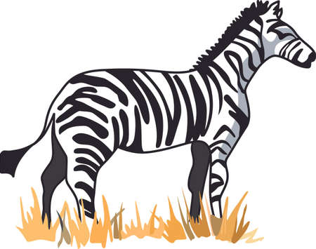 originalidad: The zebra dares to be different in the African safari.  Get these designs to inspire originality to add to a shirt.