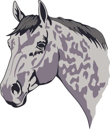 colt: This graceful horse with the wind blowing its mane will be beautiful on a shirt, vest or jacket.  This mustang design from Great Notions is a must have item for horse owners.