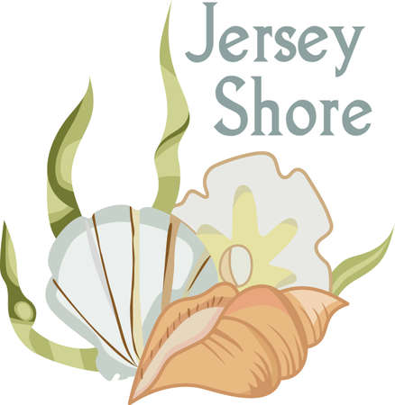 This cute little shell is perfect to take to the beach or perfect for childs room.  Give as a gift.  They will love it!