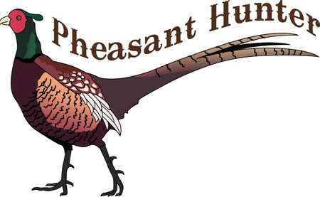 1 653 pheasant stock vector illustration and royalty free pheasant rh 123rf com pheasant clipart peasant clipart