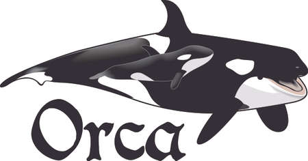 Remember that family vacation to Sea World.  Love the orcas!