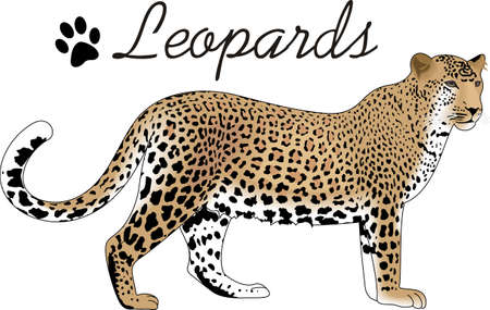 The leopard is a symbol of the jungle.  Use this image as a play on words that it is a jungle out there.