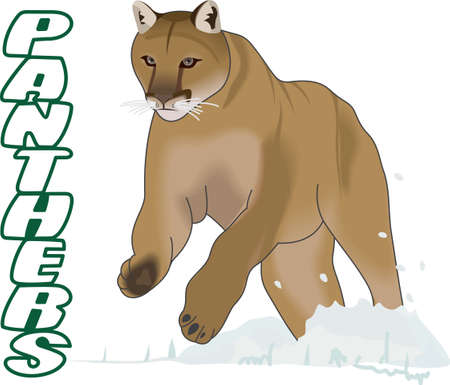 Time to cheer for the team with this Cougar mascot design.  A perfect design for all the fans from Great Notions. Illustration