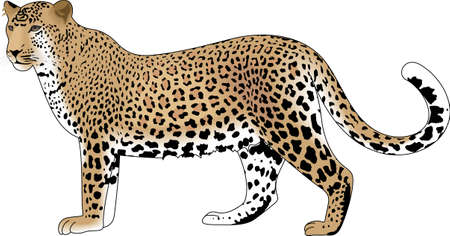 snow leopard: The leopard is a symbol of the jungle.  Use this image as a play on words that it is a jungle out there.
