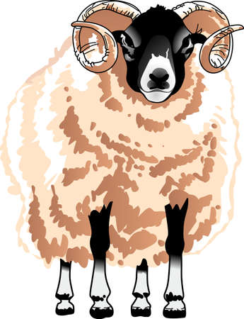 keep in: The ram is common in the mountains.  Keep your eyes open so you can see them walk on the edge. Illustration