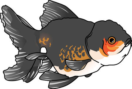 oranda: The koi is a symbol of a persons ability to have high expectations and for happiness.  This is a beautiful  design from Great Notions.