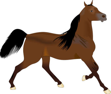 filly: This graceful horse with the wind blowing its mane will be beautiful on a shirt, vest or jacket.  This mustang design from Great Notions is a must have item for horse owners.