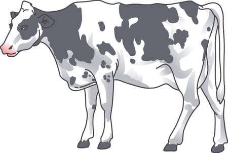 A rancher would love this image of a cow.  Add this design to a shirt with their brand on it.