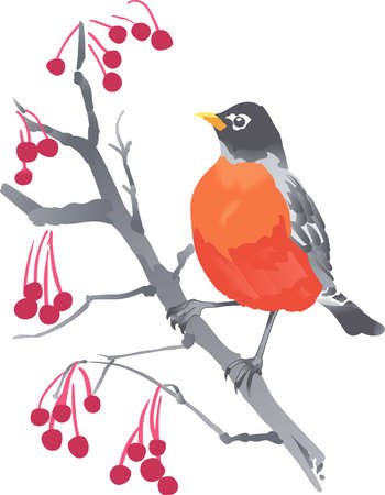 thrush: Birds are fascinating animals.  This is a perfect gift for a favorite birder you know.  They will love it!