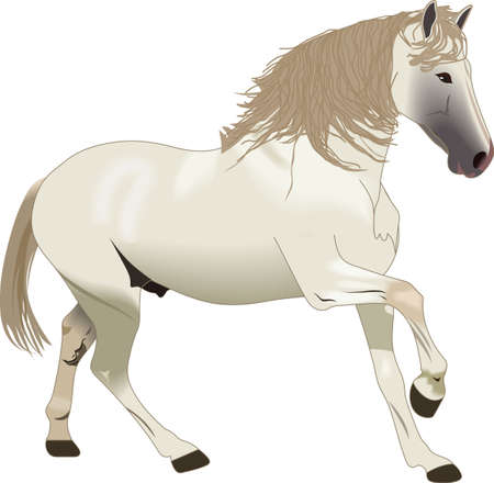 This graceful horse with the wind blowing its mane will be beautiful on a shirt, vest or jacket.  Çizim