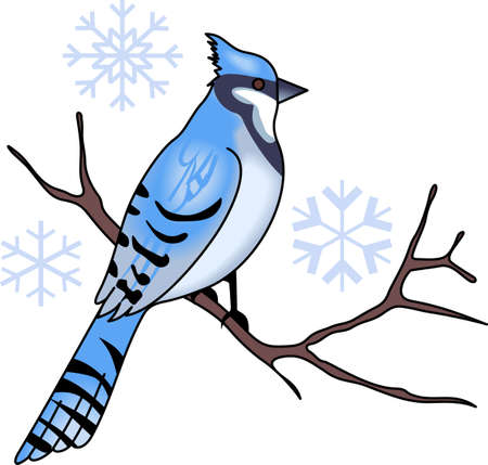 bluebird: Blue Jays are the perfect winter design.