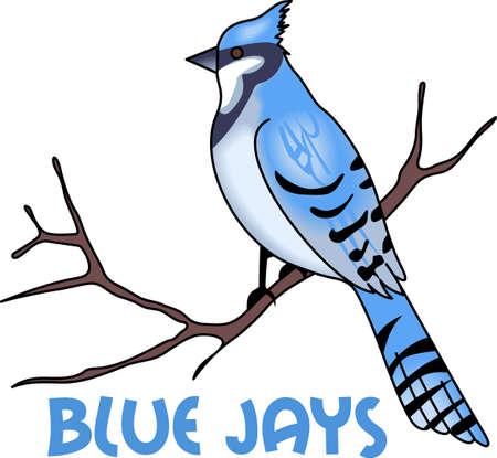 bluebird: Blue Jays are the perfect winter design.