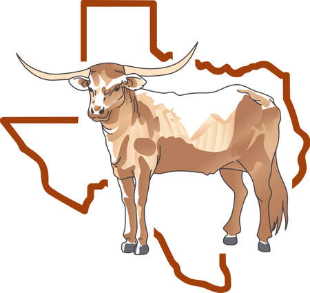 66 Texas Longhorn Steer Cattle Stock Vector Illustration And ...