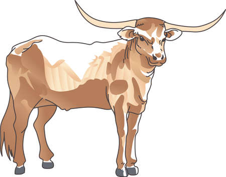 longhorn cattle: The Texas Longhorn Steer is the perfect mascot for your team.
