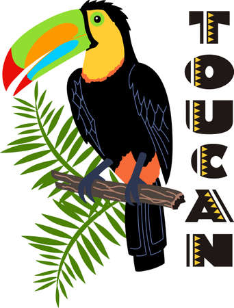 Remember the trip to Costa Rica with this beautiful toucan.