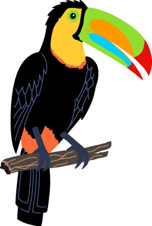 amazon rainforest: Remember the trip to Costa Rica with this beautiful toucan.    Illustration