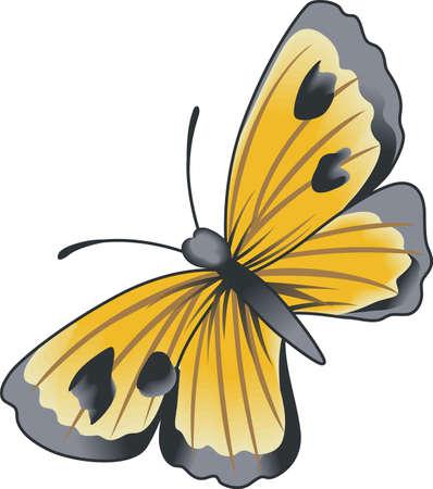 この美しい蝶は、春のデザインを示しています。  イラスト・ベクター素材