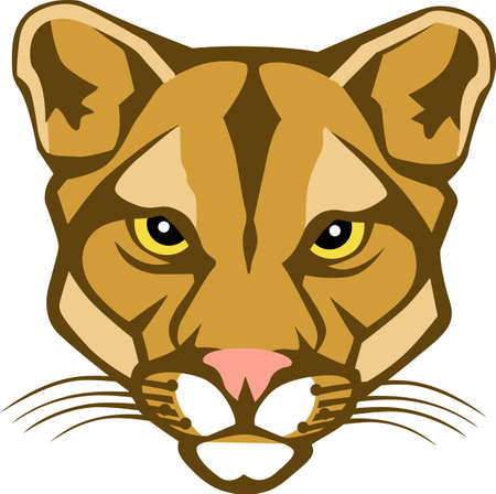 69 Cougars Cliparts, Stock Vector And Royalty Free Cougars ...