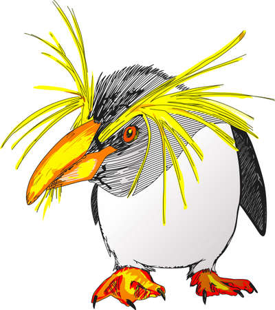antarctic: This fancy little penguin is so adorable.