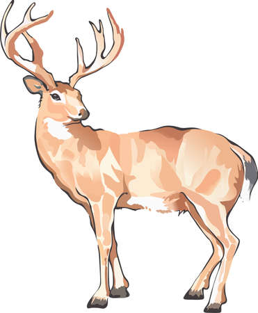 white tail deer: Life is simple, go hunting!  Get matching items for everyone in your group, they will love it.