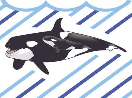 Sea World에 가족 휴가를 기억하십시오. orcas 사랑해!
