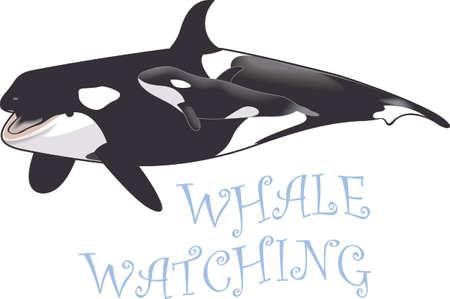 海の世界へ、家族での休暇を覚えています。 シャチが大好き!