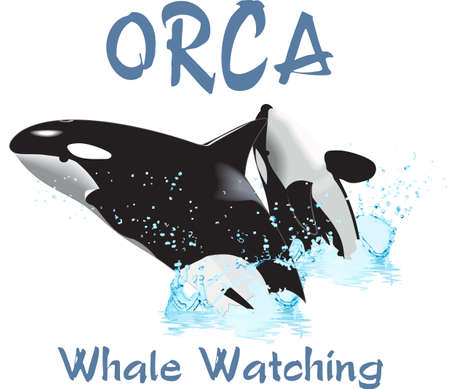 breaching: Remember that family vacation to Sea World.  Love the orcas!