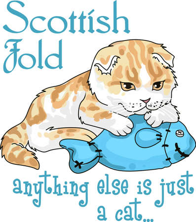 scot: Take your cat everywhere you go.