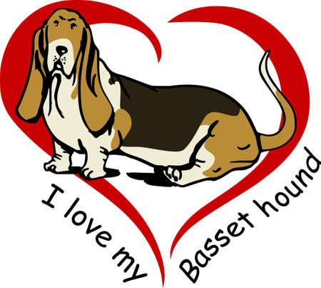 basset: I love my basset hound.