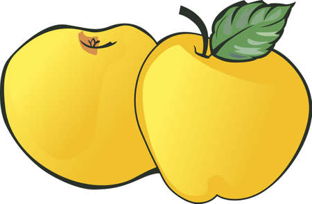 golden apple: Apples are a perfect summertime treat.  Add these to your next picnic. Illustration