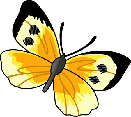 This is a beautiful butterfly for your summertime fun.   Illusztráció