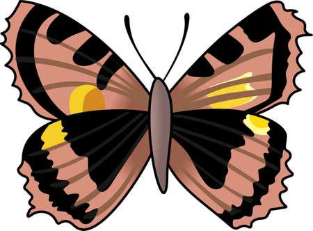 これは、あなたの夏の楽しみのための美しい蝶です。