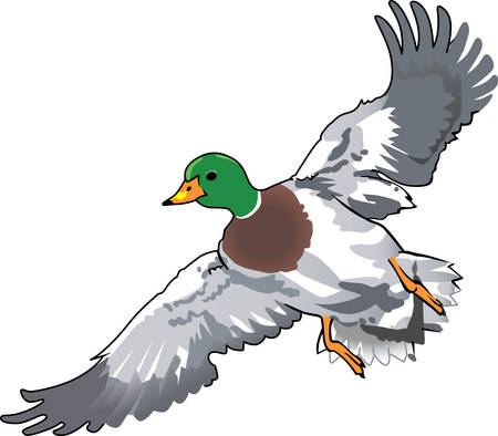 dabbling duck: Birds are fascinating animals.  This is a perfect gift for a favorite birder you know.  They will love it!
