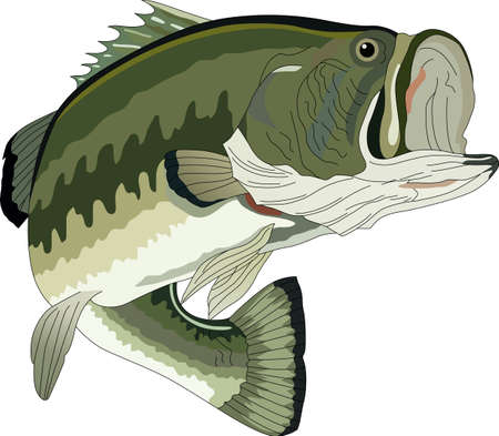 3 337 bass fish cliparts stock vector and royalty free bass fish rh 123rf com Bass Fish Outline bass fish clipart silhouette