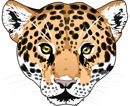 wildcat: Show your team spirit with this Jaguar  .  Everyone will love it!