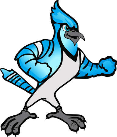blue jay bird: Show your team spirit with this Blue Jay  .  Everyone will love it! Illustration